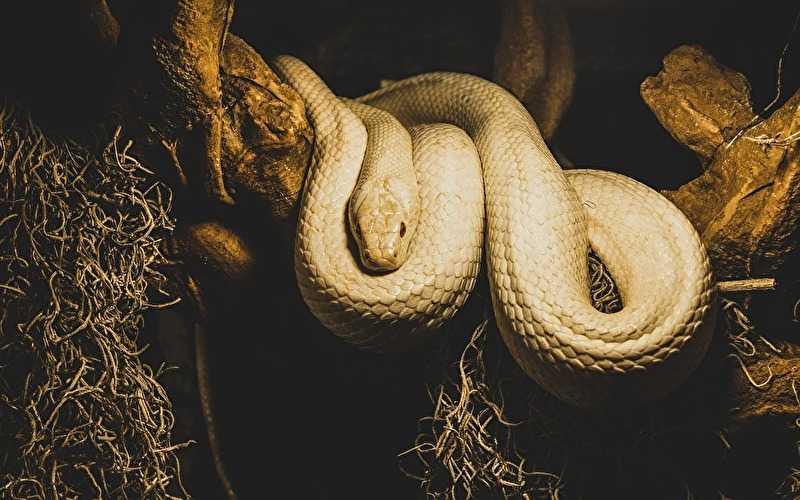 『白蛇伝説』アイキャッチ